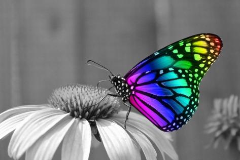 butterfly-286280_960_720