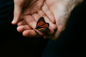monarch-butterfly-butterfly-hand